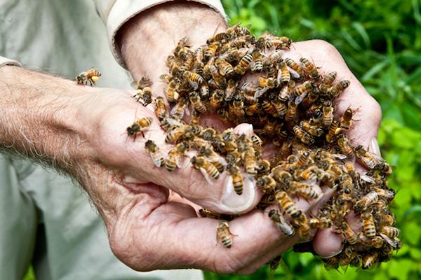 burt's-bees2