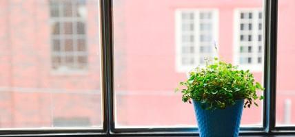 planta-en-ventana-600