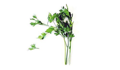 El 'green power' embellecedor del cilantro