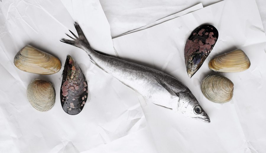 alimentos marinos, bowspa